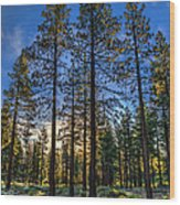Lit Up Trees Wood Print