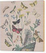 Lithosidae - Arctiidae Wood Print