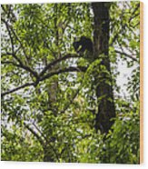 Little Bear Cub In Tree Cades Cove 2 Wood Print