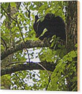 Little Bear Cub In Tree Cades Cove Wood Print