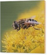 Little Bee Wood Print