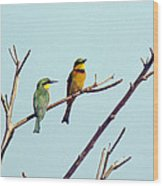 Little Bee-eaters Wood Print