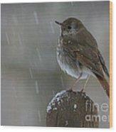Little Bird Loving The Snow Wood Print
