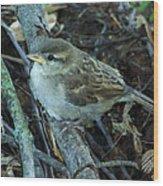 Little Bird Waiting Wood Print