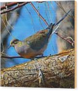 Little Birdie 2 Wood Print