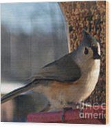 Little Gray Crested Titmouse Bird Ready For Lunch Wood Print
