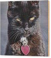 Little Black Kitty Wood Print