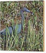 Little Blue Heron 3 Wood Print