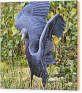Little Blue Heron Blue Wood Print