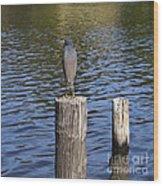 Little Blue Heron - Egretta Caerulea  Wood Print