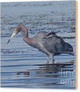 Little Blue Heron Egretta Caerulea Wood Print