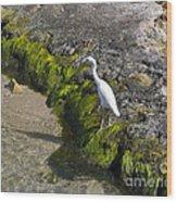 Little Blue Heron - Egretta Caerulea - White Morph Wood Print