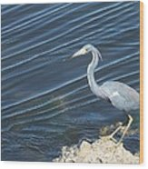 Little Blue Heron II Wood Print by Anna Villarreal Garbis