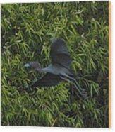 Little Blue Heron In Flight Wood Print