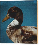 Little Brown Duck Wood Print