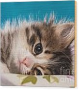 Little Cat Kitten Wood Print