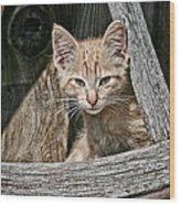 Little Charlie - Kitten By Wagon Wheel - Casper Wyoming Wood Print