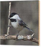Little Chickadee 2 Wood Print