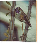 Little Costa's Hummingbird Wood Print