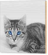 Little Cute Kitten. Space For Your Text Wood Print