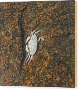 Little Dead Crab Under Water Wood Print
