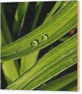 Little Drops Wood Print