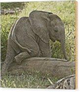 Little Elephant Big Log Wood Print
