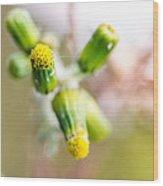 Little Flower 03 Wood Print