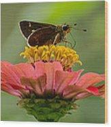 Little Glassywing Skipper Butterfly Wood Print