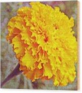 Little Golden  Marigold Wood Print