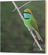 Little Green Bee-eater  Merops Orientalis Wood Print
