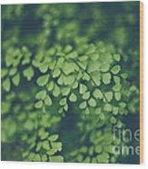Little Green Leaves Wood Print