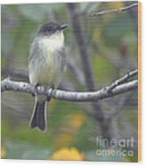 Little Lady Eastern Kingbird Wood Print