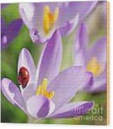 Little Ladybug On Flowers In My Garden Wood Print
