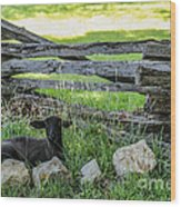 Little Lamb Wood Print