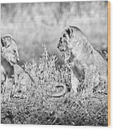 Little Lion Cub Brothers Wood Print