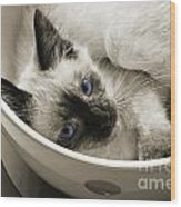 Little Miss Blue Eyes B W Wood Print by Andee Design