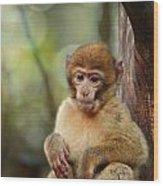 Little Monkey Wood Print