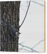 Little Nuthatch Wood Print by Rhonda Humphreys