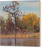 Little Oak II Wood Print