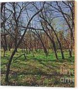 Little Oaks Wood Print by David Taylor
