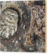 Little Owl 4 Wood Print