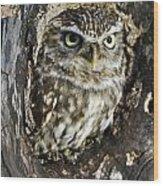 Little Owl 6 Wood Print