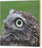 Little Owl Wood Print by Ed Pettitt