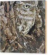 Little Owl In Hollow Tree Wood Print