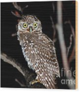 Little Owl Or Spotted Owlet Wood Print