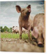 Little Pigs Wood Print