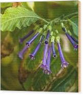 Little Purple Bells Wood Print