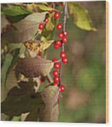 Little Red Berries Wood Print