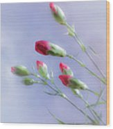 Little Red Carnations In The Sun Wood Print